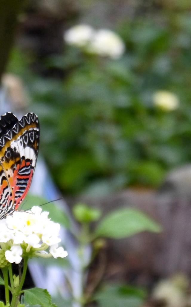 Vivez L'effet Papillon